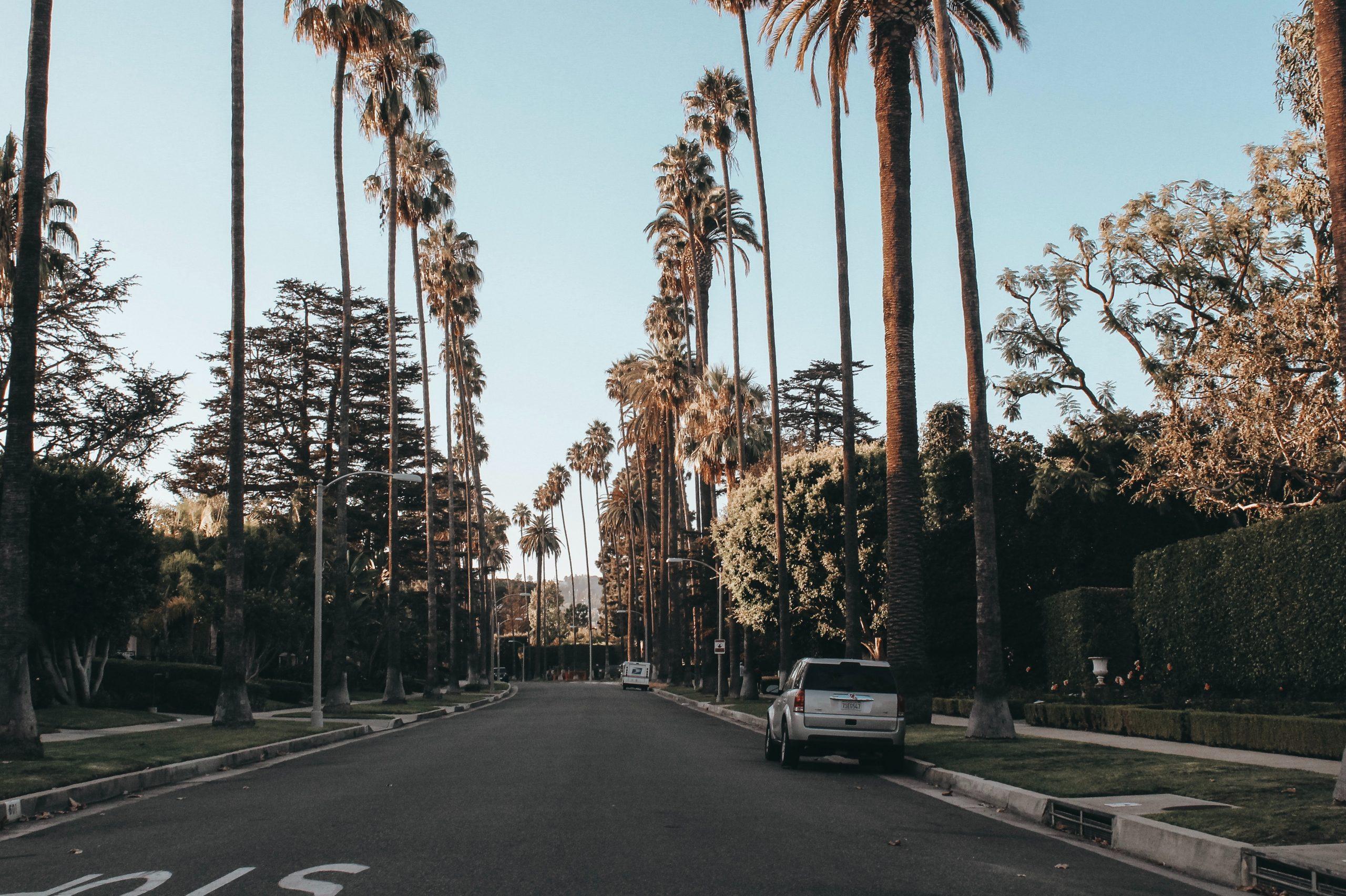 hollywood_palmeras
